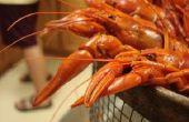 Manger les espèces envahissantes : Cajun et suédois Style Rusty écrevisses bout