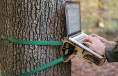Permanent d'arbre Bureau