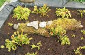 Tourbière artificielle des plantes carnivores