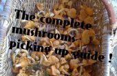 Guident les champignons complètes cueillette-up