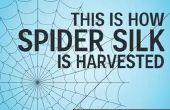 Comment la soie d'araignée est récolté