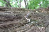 Créer un Drop Dead USB dans la Nature