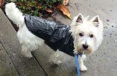 Veste de pluie chien pas cher rapide