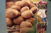 Cultiver des pommes de terre en A 5 Gallon seau
