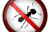 Répulsif fourmis méthode '' naturelle '' * vous devez juste 10 deuxième