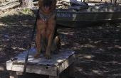 Easy Dog Training avec une table plotz