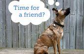 Comment choisir un deuxième chien