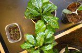 Comment entretenir une plante d'intérieur