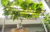 Comment cultiver des concombres à l'intérieur