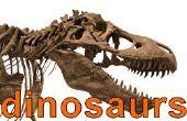 Comment participer au concours de dinosaure - résultats !