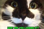 Traitant première nuit de votre chat à la maison !