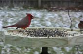 Bird Feeder Photo Port