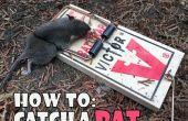 Comment attraper un rat