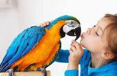 Comment faire pour créer des liens avec vos oiseaux de compagnie