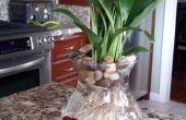 8 $ Bettas & Vase a fleurs