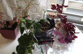 Rénovation tout planteur avec système d'arrosage hydroponique