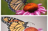 Transformer votre photo préférée en une peinture murale à l'aide d'une grille - tout le monde peut le faire !