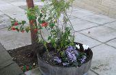 Comment planter des fleurs sur votre trottoir