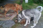 Camping avec les chiens plus facilités