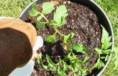 Comment créer un conteneur Simple et basique Double concentré de tomates avec réservoir d'eau