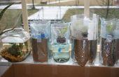 Jardin de laitue hydroponique à partir de bouteilles en plastique (bouteilles de Grow)