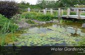 Réseau des étangs jardin dans votre arrière-cour - idée de bricolage