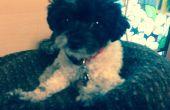 Coussin chien avec vieux chandail et oreiller et nage de nouille
