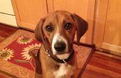 Comment obtenir votre chien à Shake (après que vous avez appris à s'asseoir).