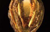 À l'aide de Fusion pour faire des Sculptures en collaboration avec abeilles