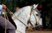 Se préparer pour un voyage à cheval