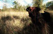Chien de chasse au chien des Baskerville : Pet Photo modifier