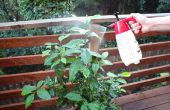 Des pesticides organiques et pulvérisation de fongicide