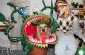Phoenix et Gryphon dans « Little Shop of Horrors »