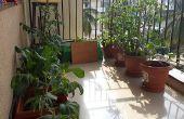 Automatique d'arrosage des plantes et de détection d'humidité du sol