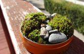 Mini mousse jardin arrière-cour matériaux