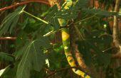 Faire un épouvantail serpent