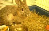 Comment prendre soin d'un lapin récemment stérilisés/castrés
