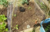 Comment construire un treillis de jardin potager de faible coût