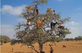 Comment grimper sur un arbre
