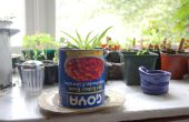 Comment faire un jardin intérieur