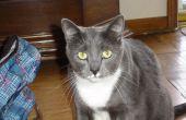 Comment faire pour obtenir de bonnes photos de chats