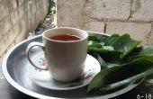 Thé de feuilles de Corossol!!! Cancer FREEEE!!!