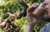 Masala Chai - Indian Spice Tea (recette authentique de l'Himalaya)