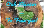 Souche de chêne planteur - pour libre-zies !
