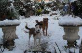 Comment garder un chien amusé dans la neige