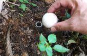 Irrigation mèche compacte : Une Solution pauvre
