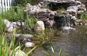 Étang ou jardin d'eau - comment construire l'étang d'arrière-cour