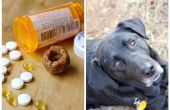Pochettes de pilule pour chien
