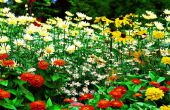 Système de jardinage automatisé Garduino