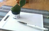 Comment propager les cactus!!!